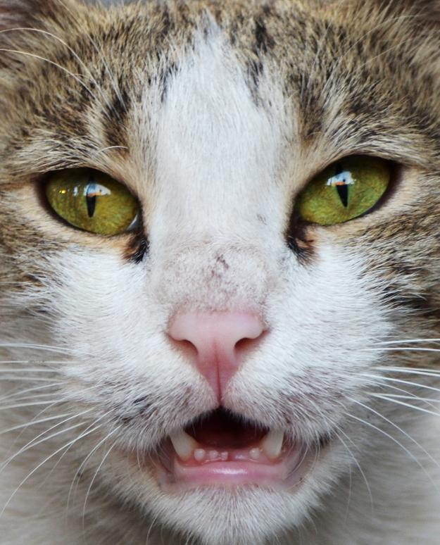 ژست گربه