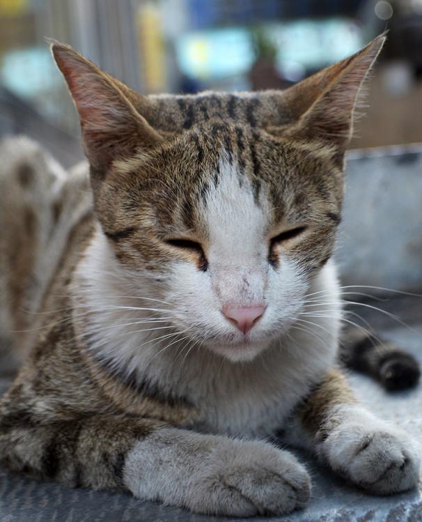 گربهي ملوس